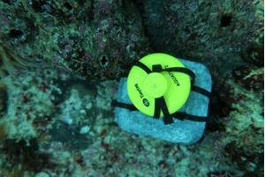 Aquatic 2 temperature data logger in situ underwater